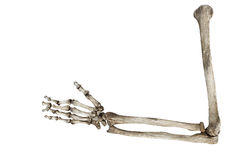 Alte Knochen der menschlichen Hand lokalisiert auf weißem Hintergrund Lizenzfreie Stockfotografie