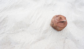Alte Kokosnuss auf Sandhintergrund Stockfoto