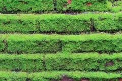 Alte konkrete Backsteinmauer mit Moos Stockfotos