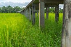 Alte konkrete Bahn auf dem grünen Reisgebiet Stockfoto