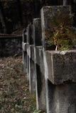 Alte Kreuze des unbekannten Soldaten an der Dämmerung Ein lehnendes Th des Tannenbaumasts Stockfotografie