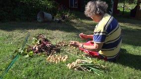 Alte ländliche Frau, die auf neuen Zwiebelköpfen des Grasprozesses sitzt 4K stock footage