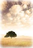 Alte Landschaft Stockbild