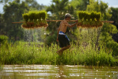 Alte Landwirtfunktion Stockfoto