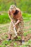 Alte landwirtschaftliche Frau, die das Land bearbeitet Lizenzfreies Stockbild