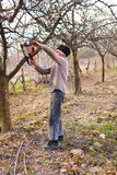 Alte Landwirtzutat-Apfelbäume Lizenzfreie Stockfotografie