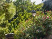 Alte Laterne in den Dickichten des Oleanders Lizenzfreie Stockfotografie