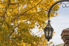 Alte Laterne und Baum mit gelbem Baum verlässt Buenos Aires Argentinien nett Stockbild