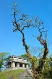 Alte Mayatempel Palenque Lizenzfreie Stockfotografie
