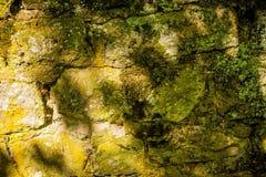 Alte, mittelalterliche Abteiwand Lizenzfreie Stockbilder