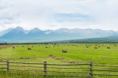 Alte montagne con i picchi nevosi, Immagini Stock Libere da Diritti
