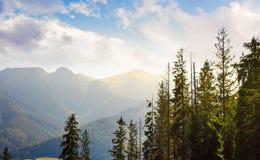 Alte montagne di Tarta dietro gli alberi Fotografia Stock Libera da Diritti