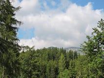 Alte montagne di Tatra, Slovacchia Immagine Stock