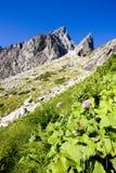 Alte montagne di Tatras Immagine Stock