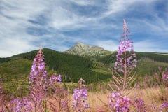 Alte montagne - Krivan, alto Tatra Fotografie Stock