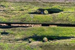 Alte moosige Planken vom Abschluss Stockbild