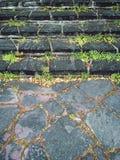 Alte moosige Steinschritte Stockfotos