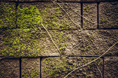 Alte moosige Steinwandbeschaffenheit mit Wurzeln als altem Hintergrund Stockbild