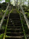 Alte moosige Treppe draußen im Wald stockfotografie