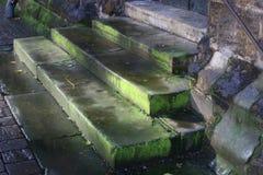 Alte moosige Treppen Stockbilder