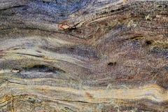 Alte nasse Kiefer des Naturholzhintergrundes Sonniger Frühlingstag Stockbilder