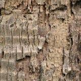 Alte natürliche Barkebeschaffenheit Stockfotos