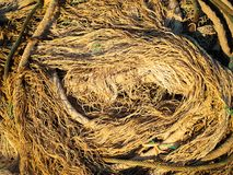 Alte Netze und Seile Stockfotos
