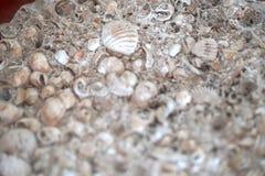 Alte Oberteile versteinert im Steinhintergrund stockfoto