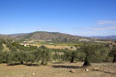 Alte Olivenbäume in der szenischen Landschaft von Andalusien Lizenzfreies Stockbild