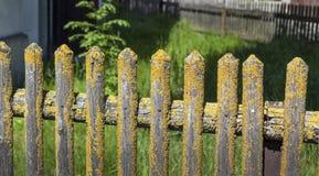 Alte Palisade bedeckt mit Moos stockfotografie