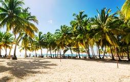 Alte palme esotiche su una spiaggia selvaggia contro le acque azzurrate del mar dei Caraibi, Repubblica dominicana Immagini Stock Libere da Diritti