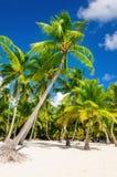 Alte palme esotiche sulla spiaggia selvaggia contro le acque azzurrate del mar dei Caraibi, Fotografia Stock Libera da Diritti