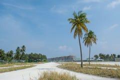 Alte palme sulla strada del villaggio all'isola tropicale Maamigili Fotografia Stock