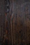 Alte Pappel Stockbild
