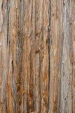 Alte Pappel Stockfoto