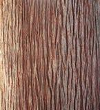 Alte Pappel Foto einer Nahaufnahme der Baumrindebeschaffenheit lizenzfreie stockbilder