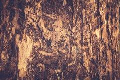 Alte Pappel Hölzerne Beschaffenheit Tonen des Fotos Stockfotografie