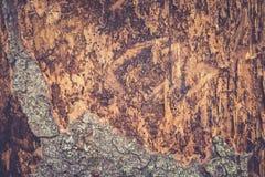 Alte Pappel Hölzerne Beschaffenheit Tonen des Fotos Lizenzfreies Stockfoto