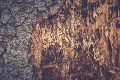 Alte Pappel Hölzerne Beschaffenheit Tonen des Fotos Lizenzfreie Stockfotografie