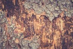 Alte Pappel Hölzerne Beschaffenheit Tonen des Fotos Lizenzfreie Stockbilder