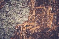 Alte Pappel Hölzerne Beschaffenheit Tonen des Fotos Stockfotos