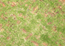 Alte Pflastersteine des roten Backsteins mit dem Gras, das entlang wächst Lizenzfreie Stockbilder