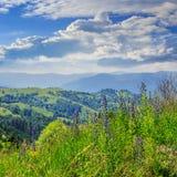 Alte piante selvatiche alla cima della montagna Fotografie Stock