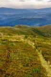 Alte piante selvatiche alla cima della montagna Fotografia Stock Libera da Diritti