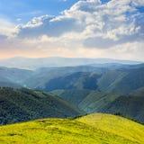 Alte piante selvatiche alla cima della montagna Immagini Stock