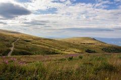 Alte piante selvatiche alla cima della montagna Fotografie Stock Libere da Diritti