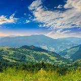 Alte piante selvatiche alla cima della montagna Fotografia Stock