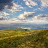 Alte piante selvatiche alla cima della montagna Immagine Stock Libera da Diritti