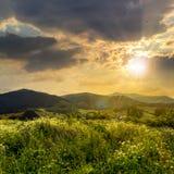 Alte piante selvatiche in montagne al tramonto Immagini Stock