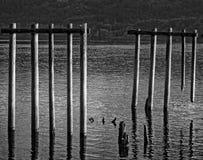 Alte Piers entlang dem Coumbia-Fluss Stockfoto
